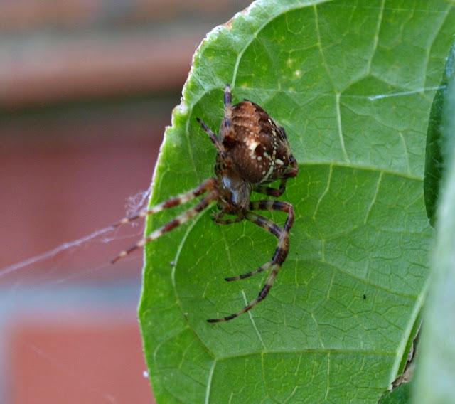 http://1.bp.blogspot.com/-2rOMOpuyWXQ/Tn4aQXi_1ZI/AAAAAAAAP6I/HO1PIOxRpXo/s640/Spider8.JPG