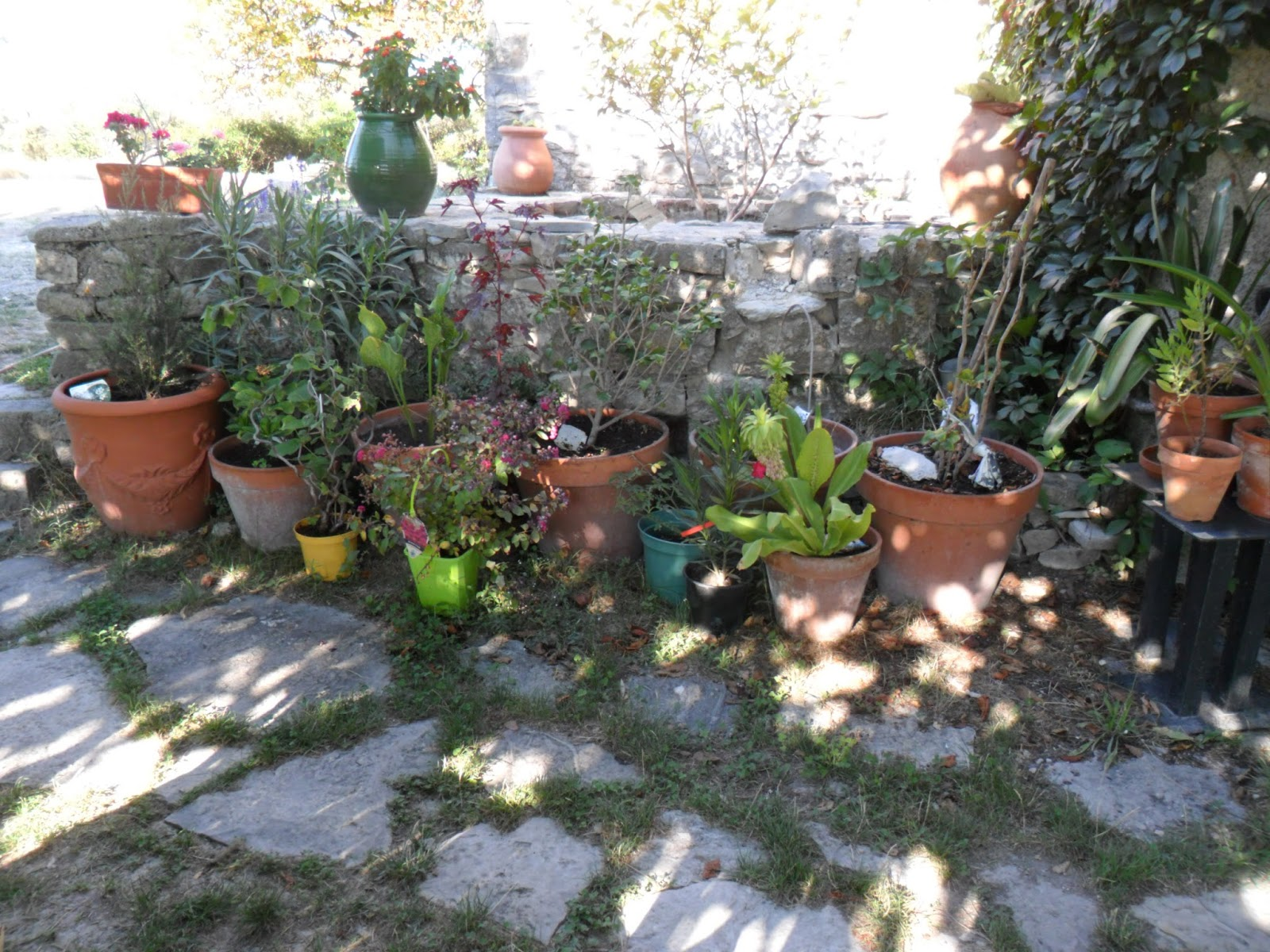 Le jardin de prosper septembre 2015 for Jardin septembre 2015