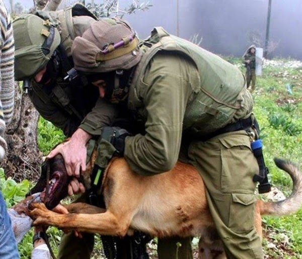 Israeli dog attacks Palestinian