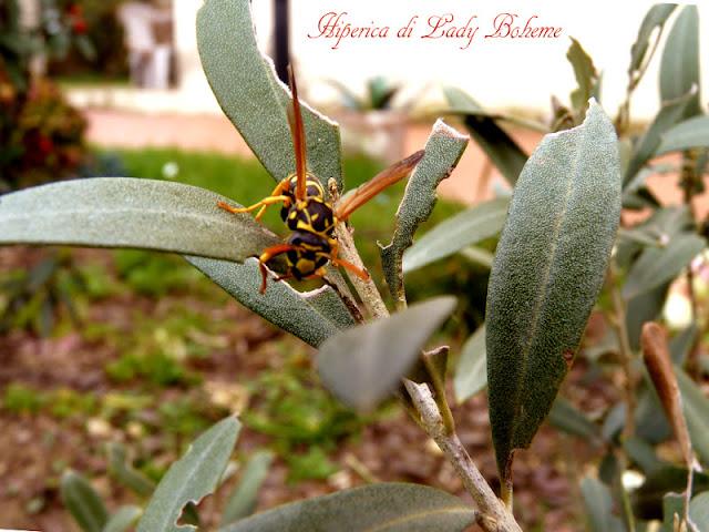 hiperica_lady_boheme_blog_di_cucina_ricette_gustose_facili_veloci_vespa_tra_le_foglie
