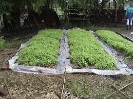 la tcnica de cultivo por supuesto se basa en la produccin sobre sustratos que no sean tierra y se hace en que permiten su