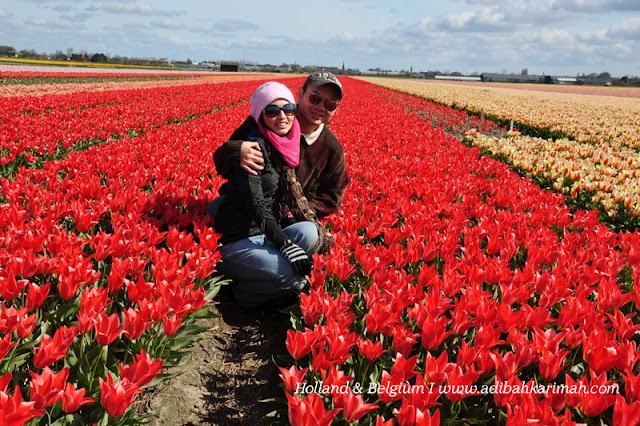 holiday to holland and belgium with premium beautiful at keukenhof with dr hasbi on tulips farm