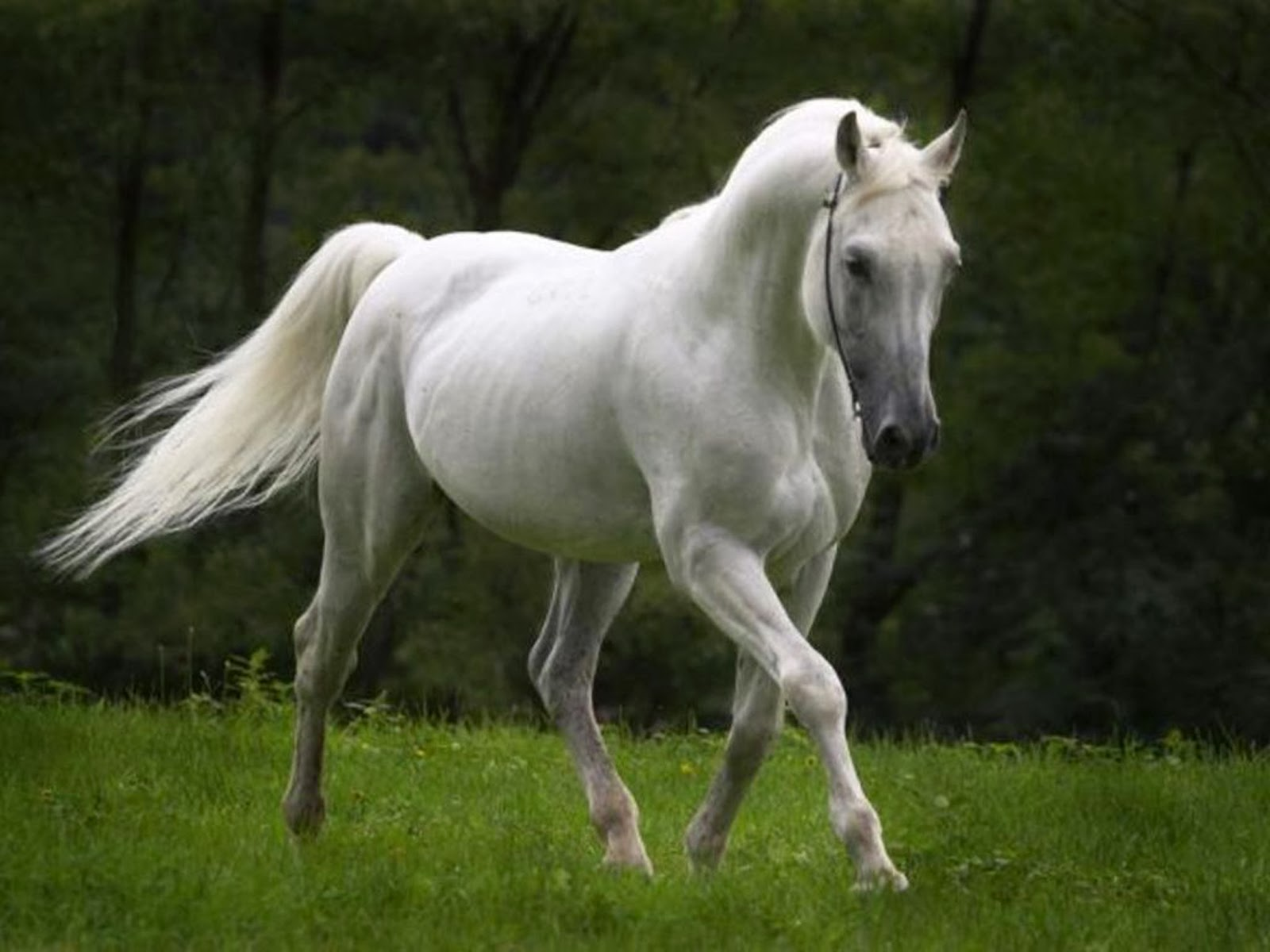 Wildlife hd wallpapers beautiful horses hd wallpapers 2014 for Wallpaper mare hd