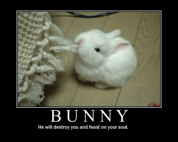 Funny Animal Demotivational Posters