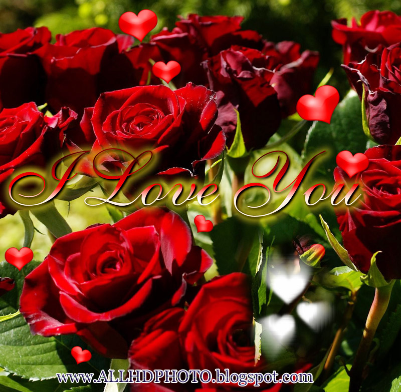 I Love You New 2013 Wallpapers 2 Galerry Wallpaper
