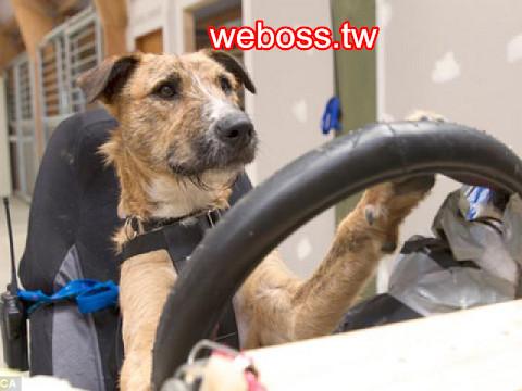 Porter會開車的狗