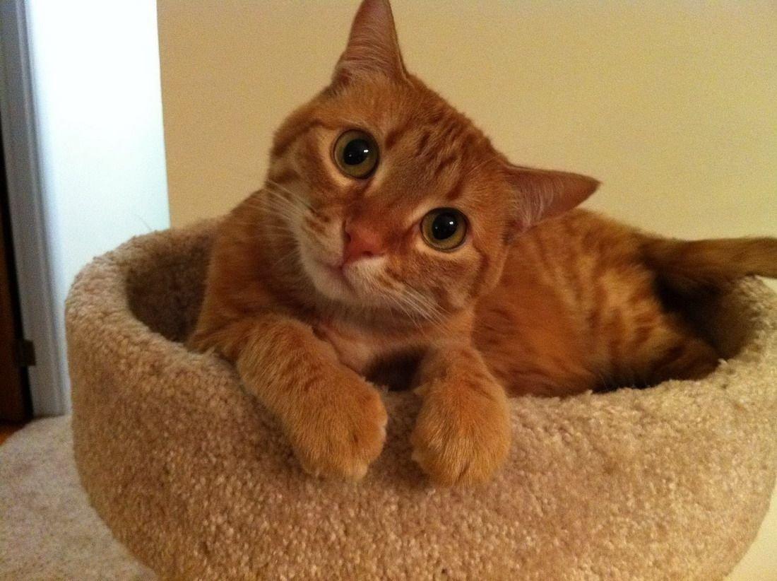 Фото котов: любопытный кот
