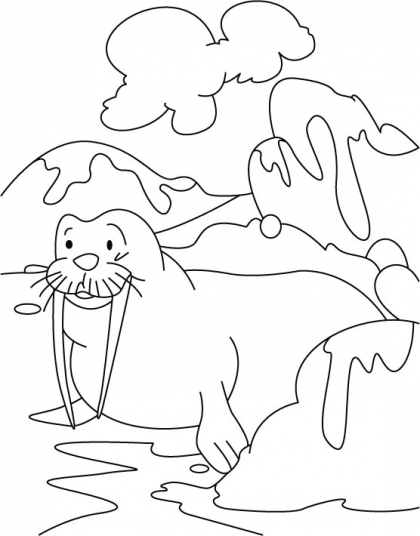 walrus coloring pages for kids - photo#29