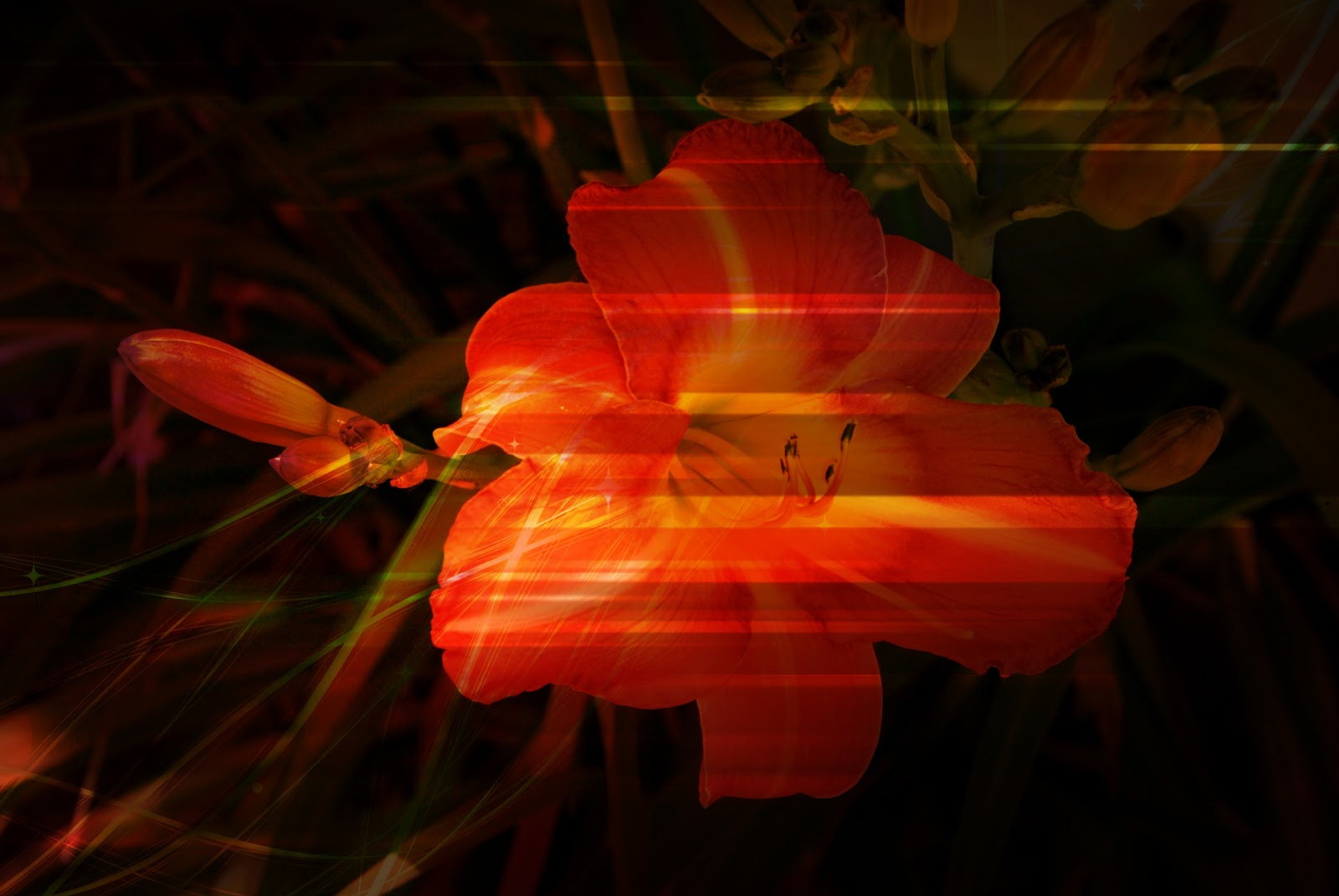 Photo Edit: Lily with Texture Layers