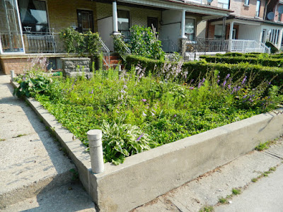Bloordale garden cleanup before Paul Jung Toronto Gardening Services