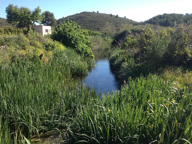 Naixement del riu Bullent