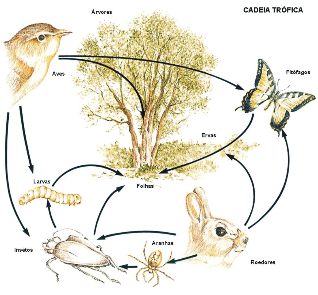 Ecologia é o estudo das interações dos seres vivos entre si e com o