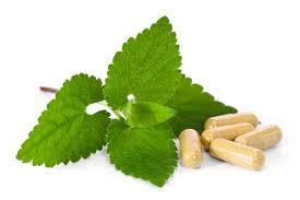 Recognize Dangerous Herbs