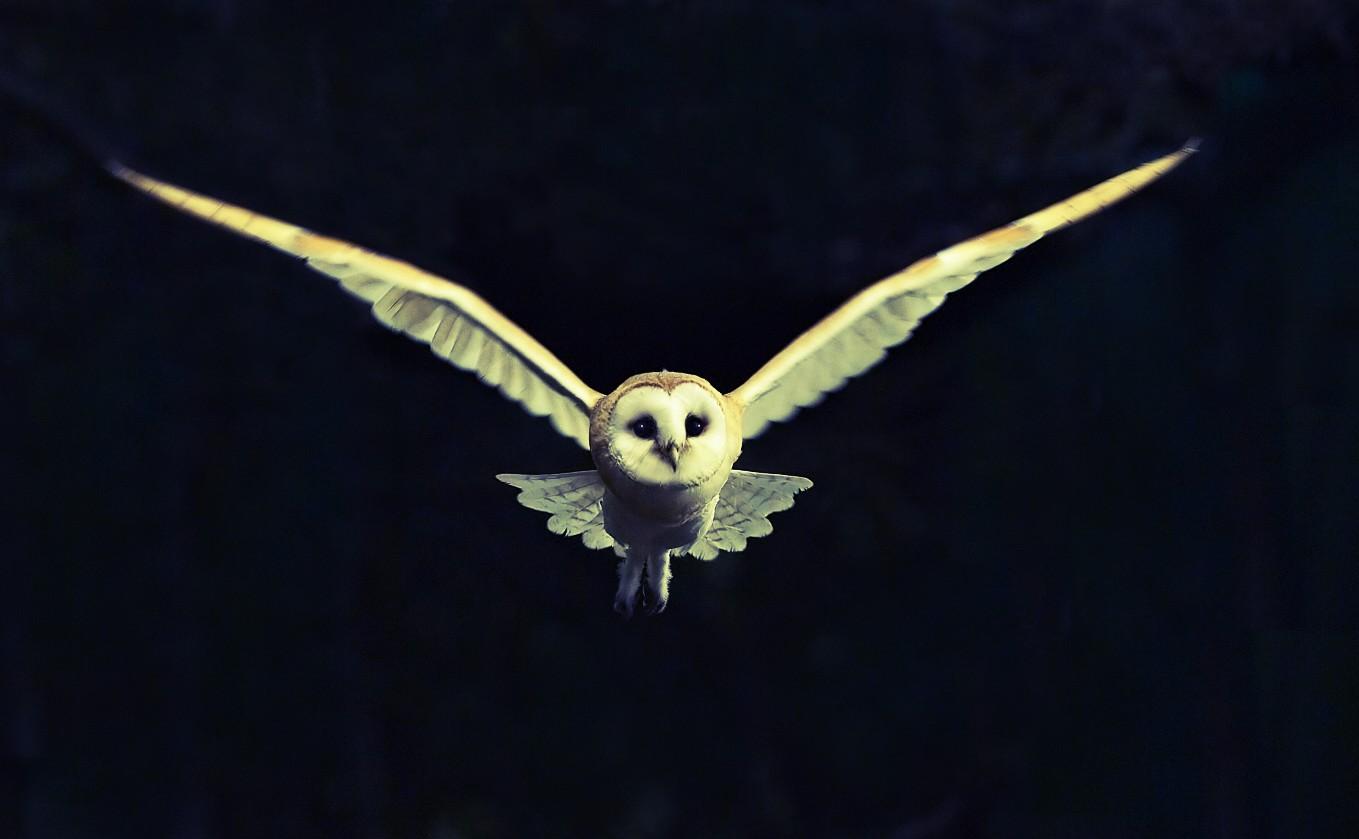 Gambar Burung Hantu 12 Pelangi Arsip