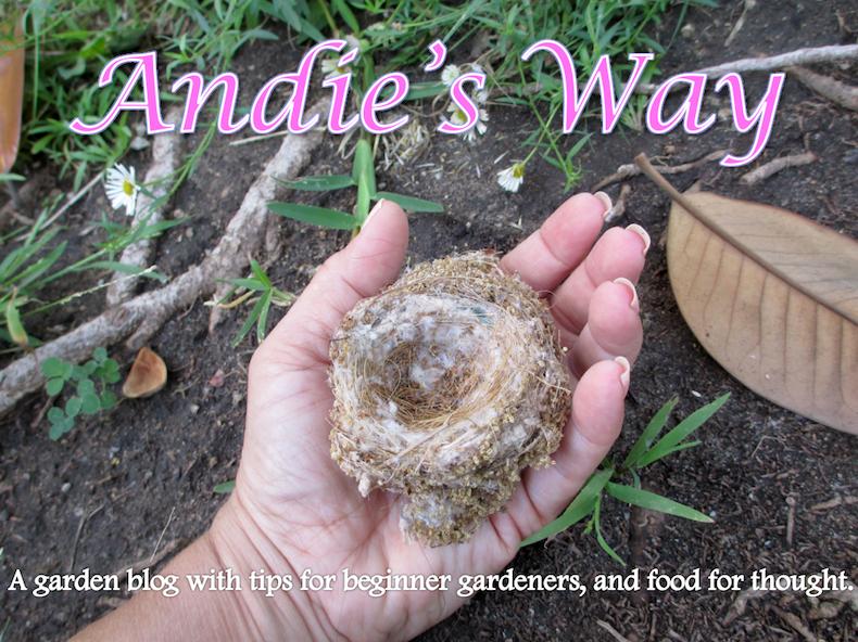 Andie's Way