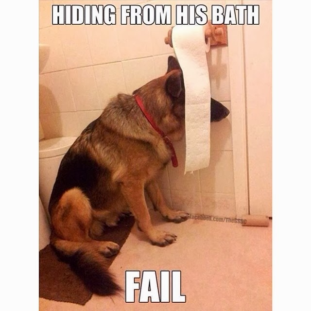 Funny Dog Photo