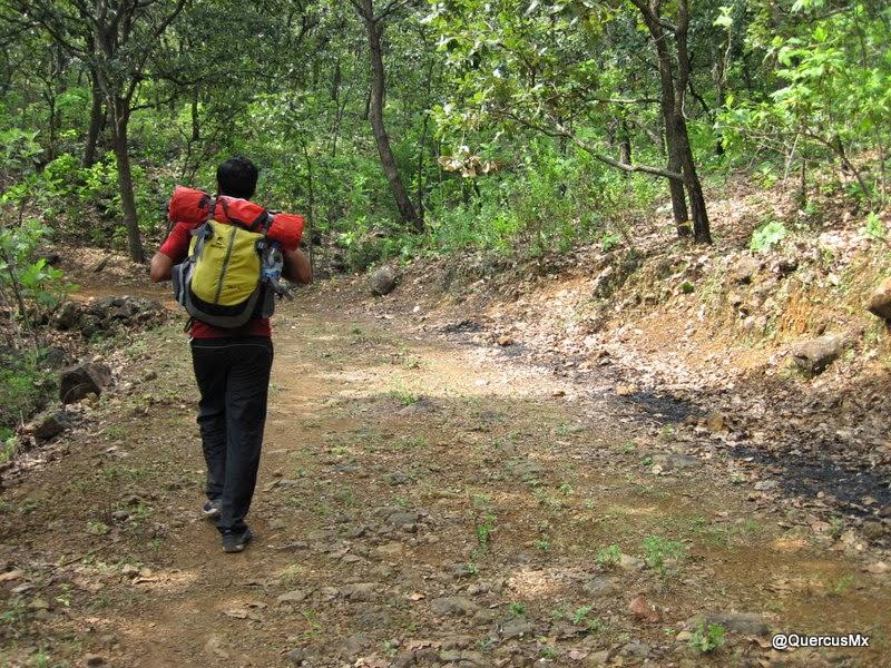 Caminando en los bosques de encino del Cerro de Tequila