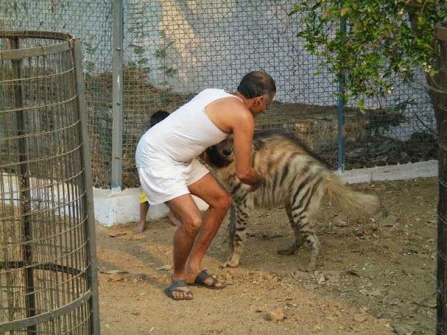 Foto bermain dengan hewan buas