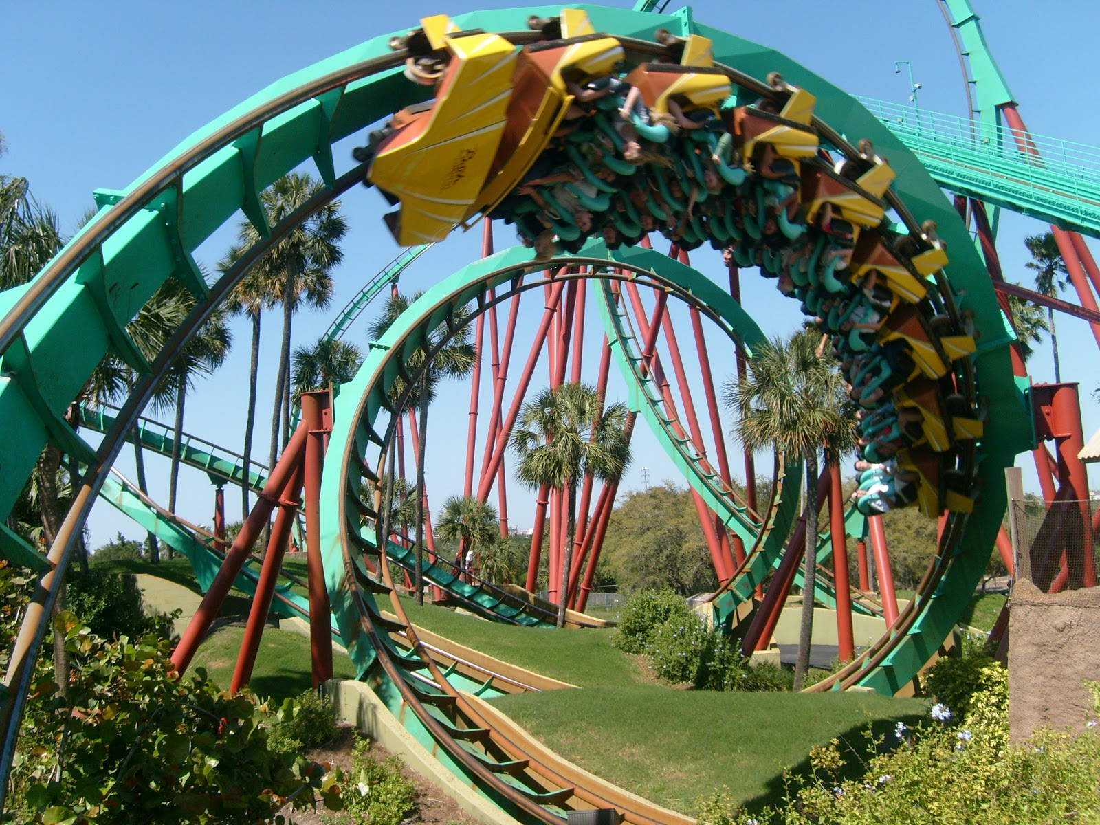 Scared Tickless The Lyme Roller Coaster