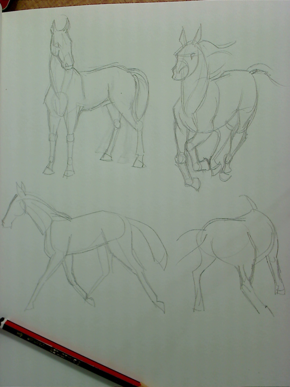 sketchbook drawings of horses