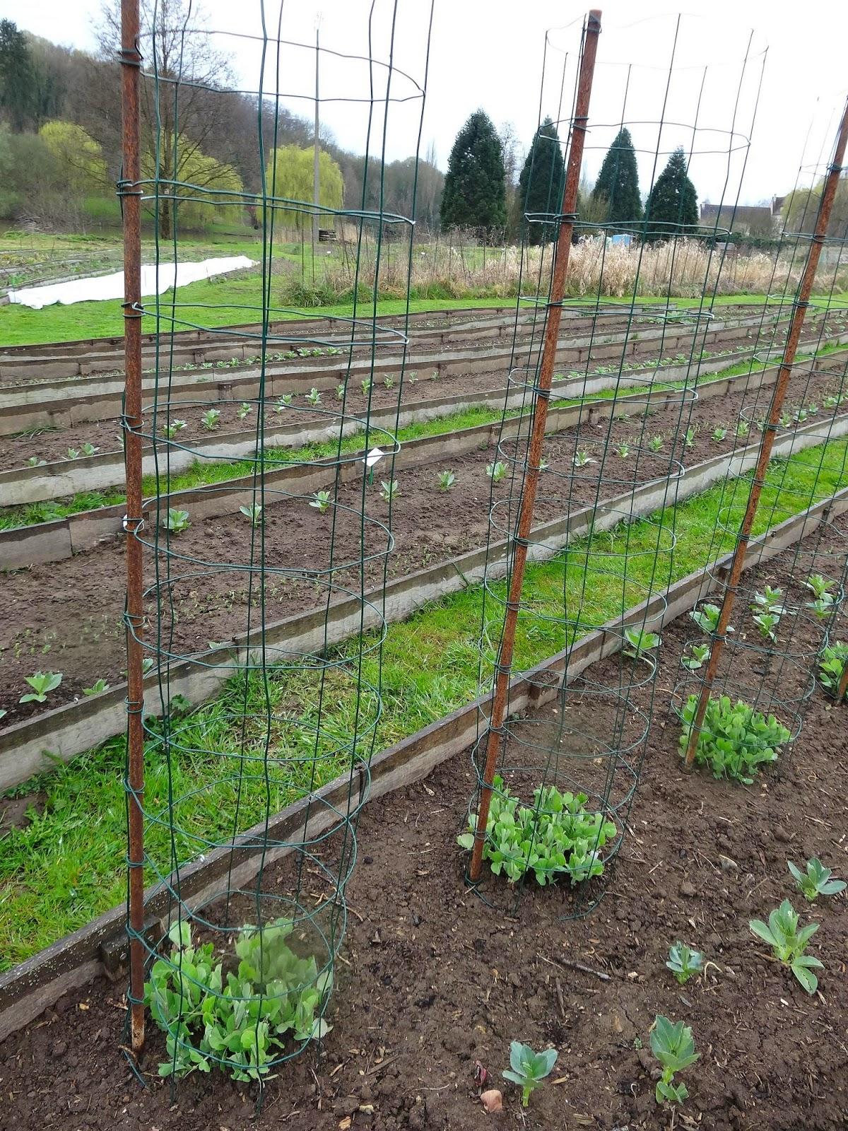 Le blog de parcs et jardins de l 39 oise sortie du 25 mars - Tuteur petit pois ...