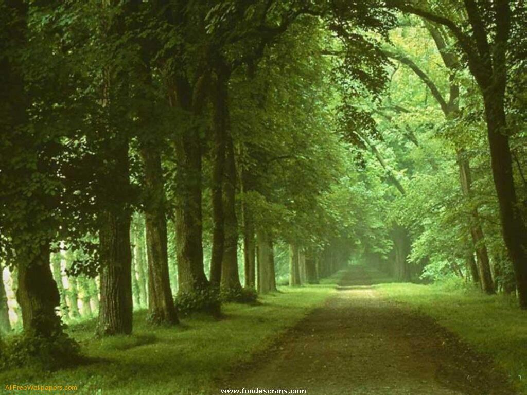 http://1.bp.blogspot.com/-2uJ9e7Gi1h8/T9spM57W7xI/AAAAAAAAAaM/iIGUIKojjNA/s1600/nature-wallpaper-45.jpg