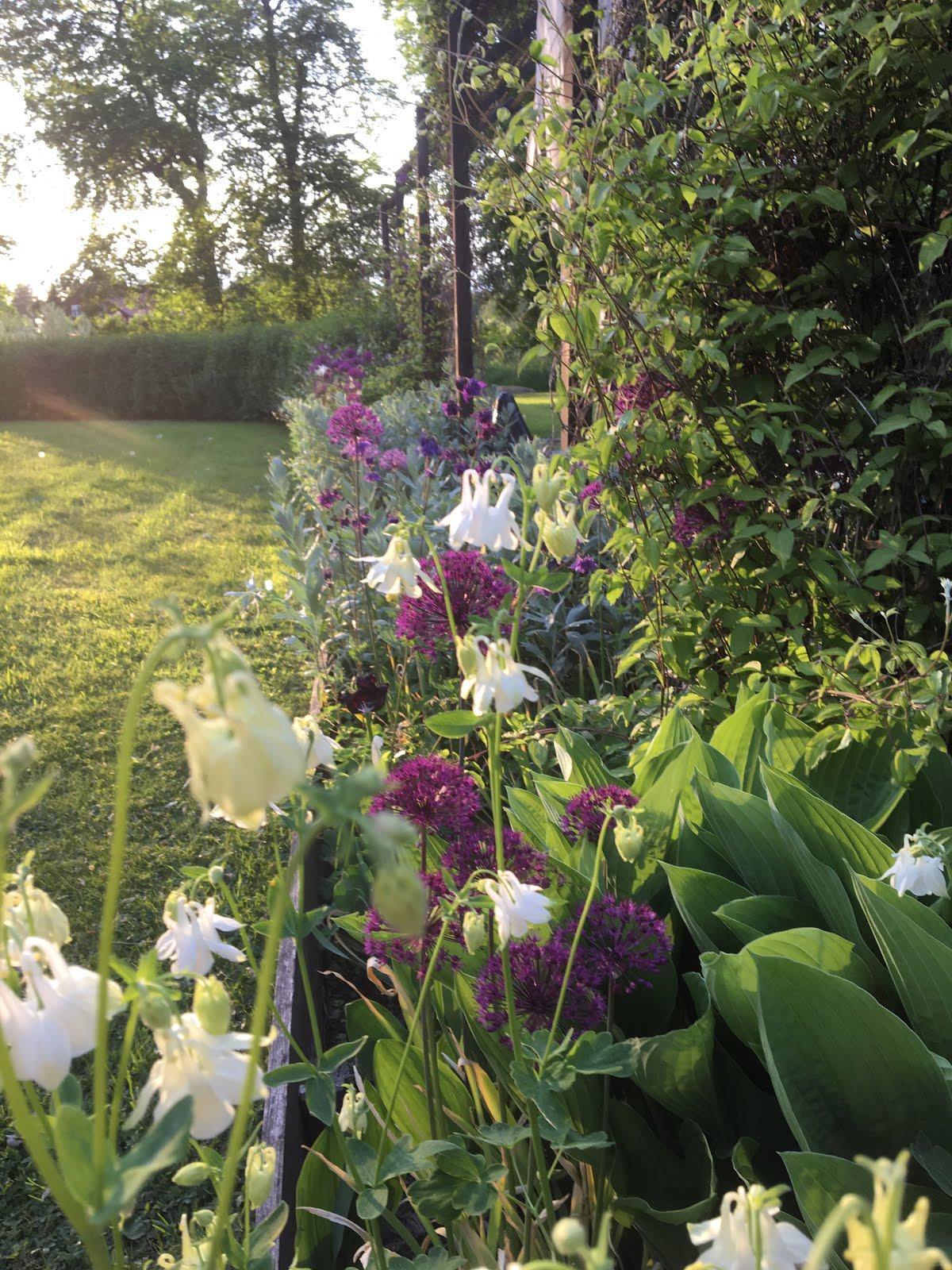 Den egna trädgården