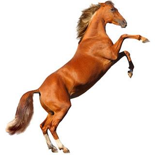 Resultado de imagen para caballo