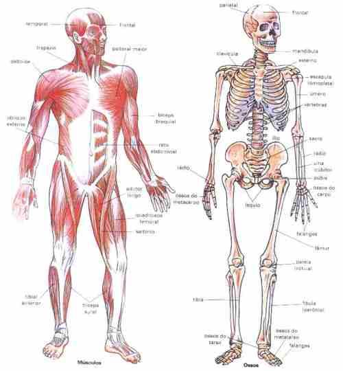 Que es anatomia?