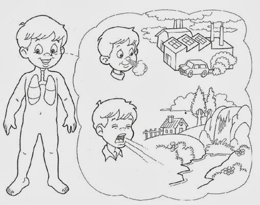 Sistema respiratorio y sus partes para niños para colorear - Imagui