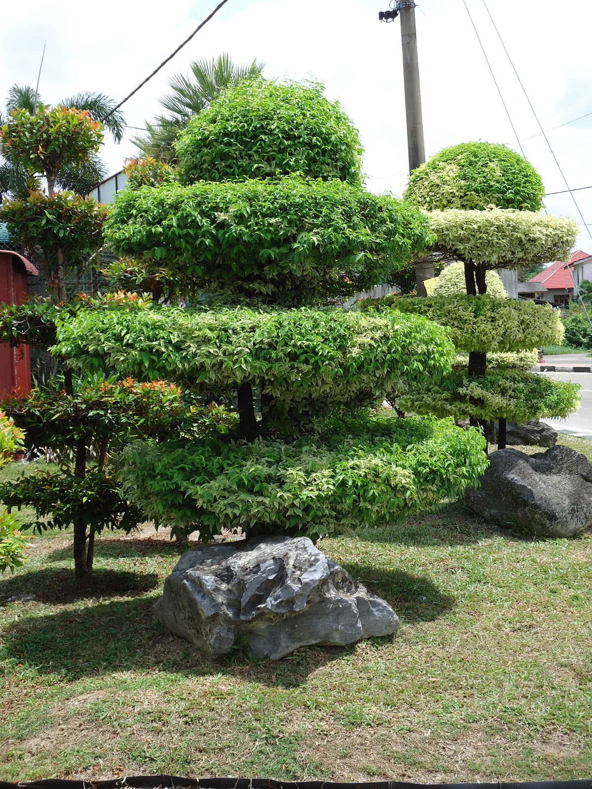 Bonsai Hobby Can Increase Revenue BONSAI HOBBY THAT CAN BE