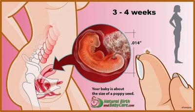 senang hamil