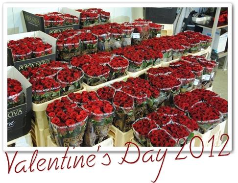 röda rosor, blommor till alla hjärtans dag
