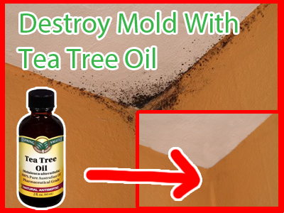 Destroy mold with tea tree oil goodiy - Natural ways remove mold ...
