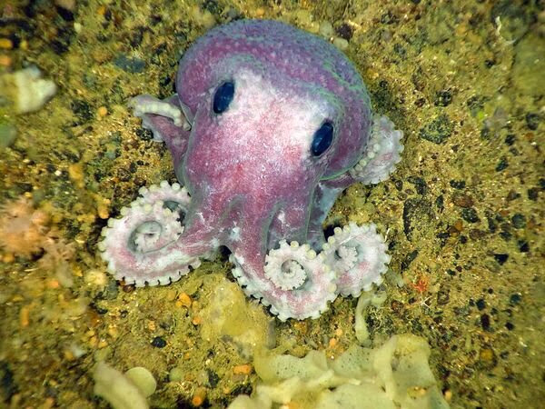 Funny animals of the week - 27 December 2013 (40 pics), baby octopus pic