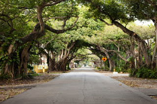old cutler road coral gables