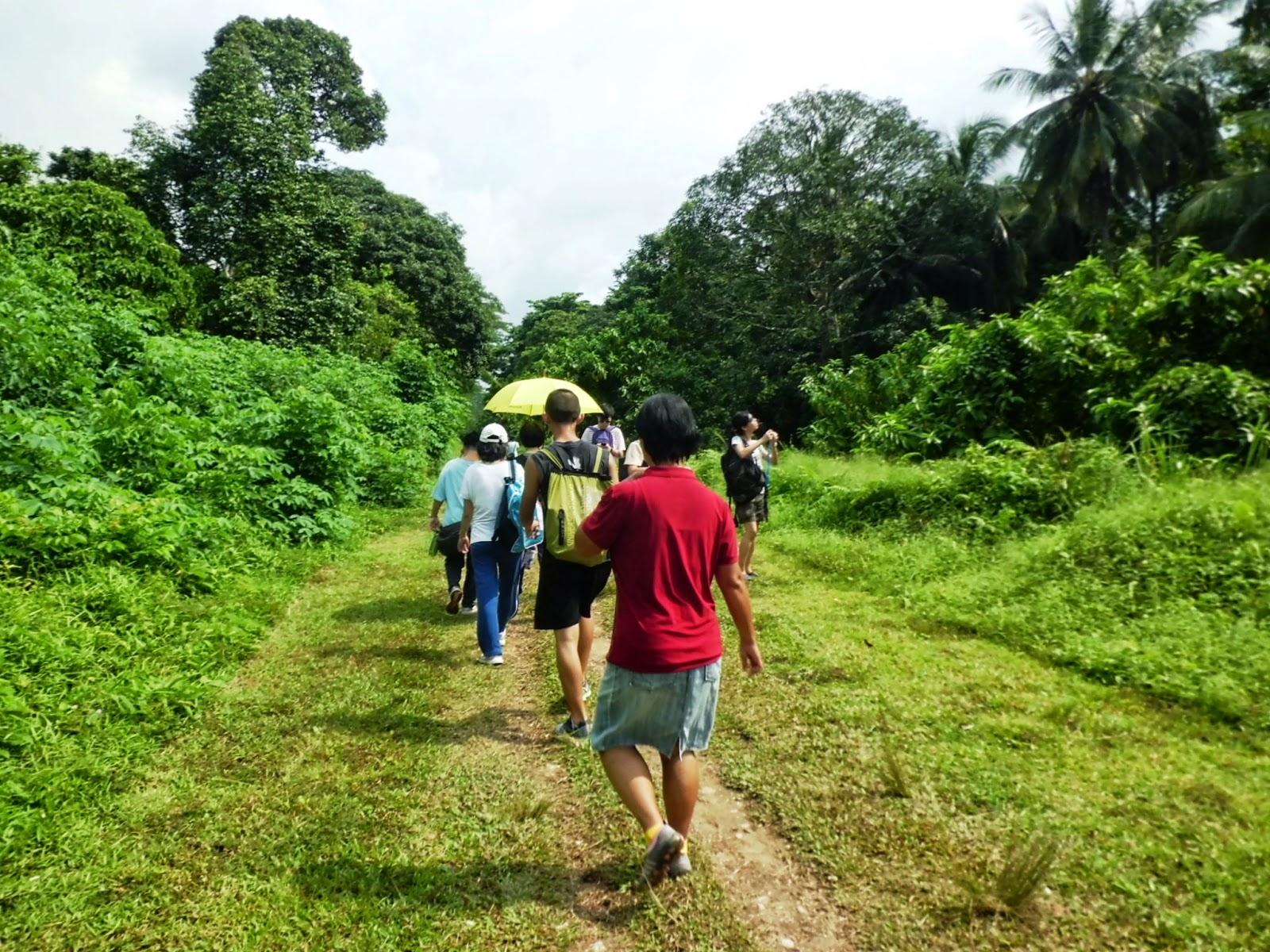 The railway corridor near Hindhede Road, Bukit Timah Nature Reserve