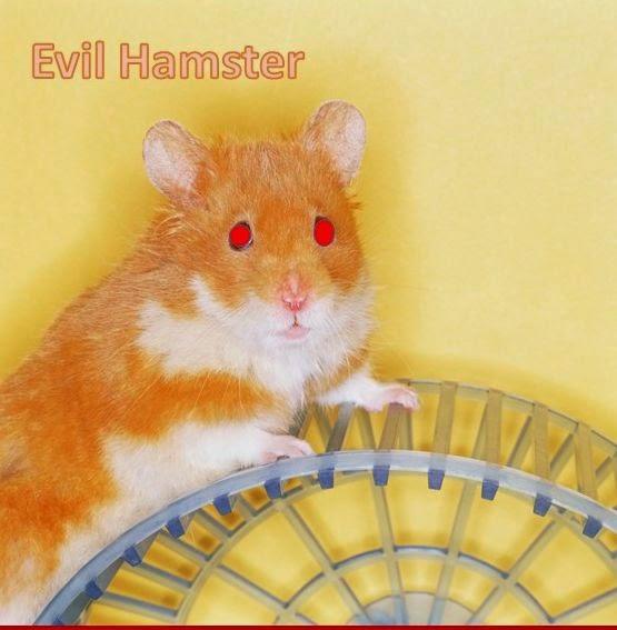 you tube hamster song