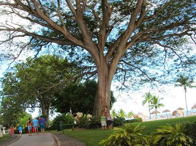Corotu,  Hotel Royal Decameron Resort Panamá, round the world, La vuelta al mundo de Asun y Ricardo, mundoporlibre.com