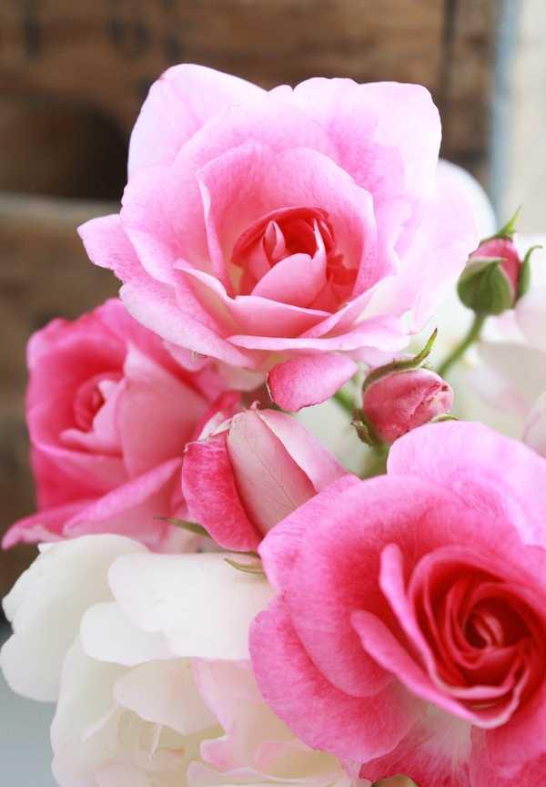 Zoom frases flores hermosas para regalar - Fotos de flores bonitas ...