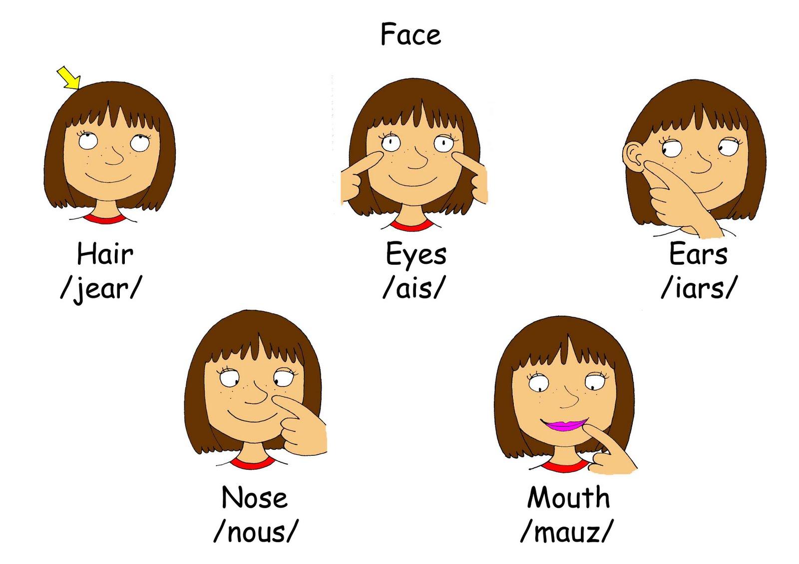 Partes de la cara para colorear EN INGLES - Imagui