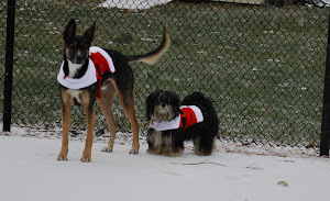 Santa Doggies