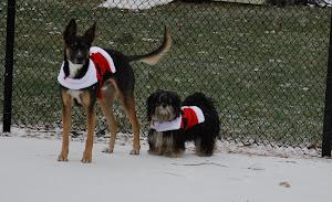 Santa Doggies
