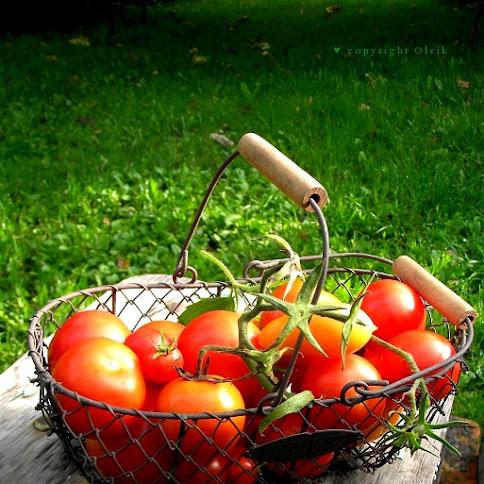 Koszyk pomidorów