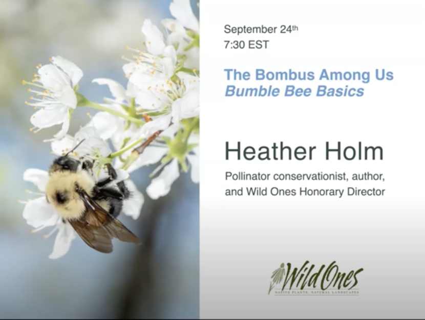 Bombus Among Us - Bumble Bee Basics