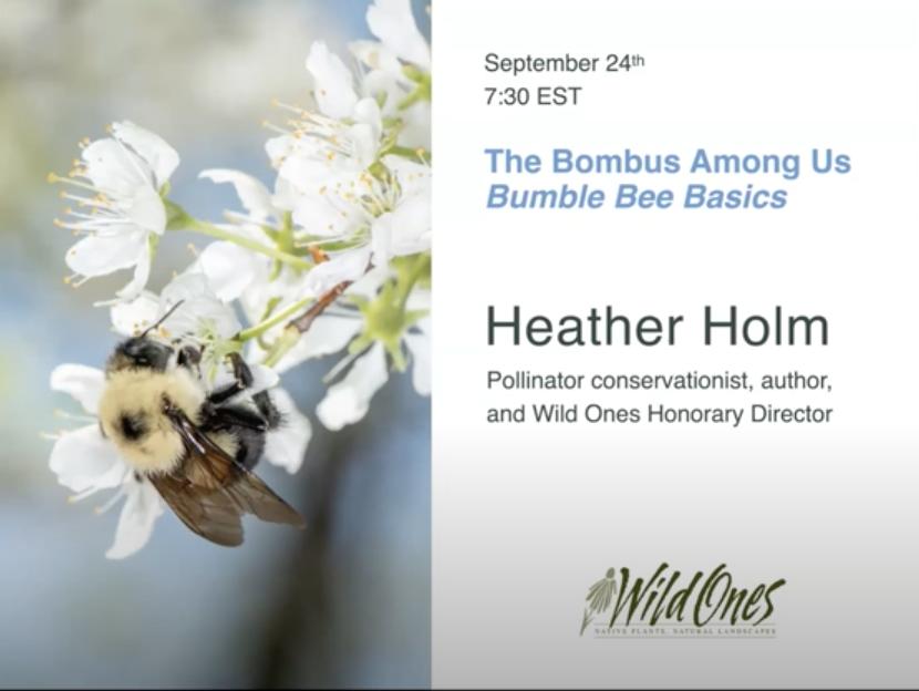 Bombus Among Us - Bumble Bee Basics