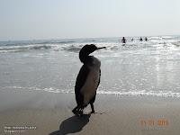 Playa de Barranca
