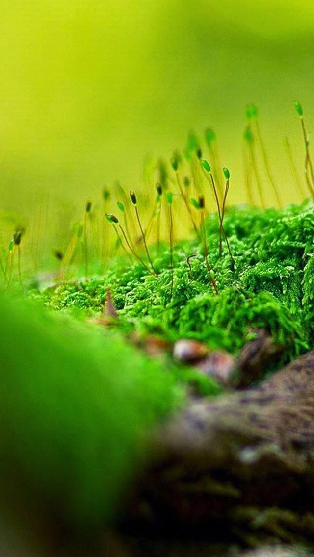 Iphone 5 5s 5c Wallpaper Nature Green Seed Bud Bokeh Covers Heat