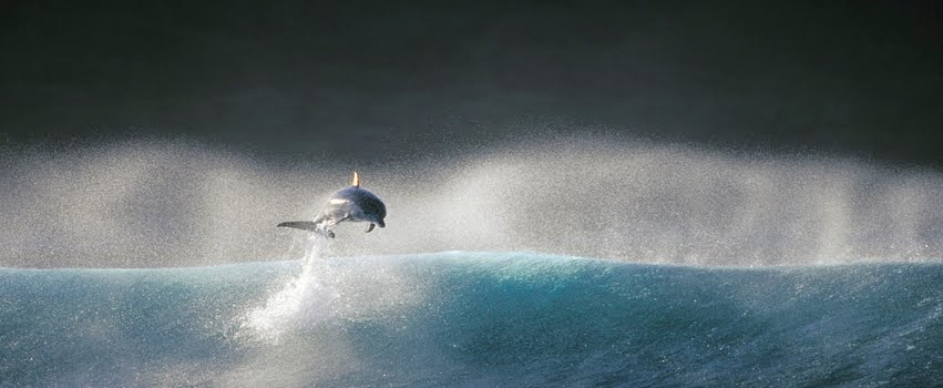 Single Dolphin In Sea