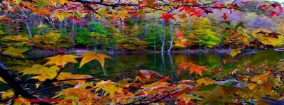 Couverture facebook feuilles d'automne 7